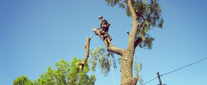 Кронирование и удаление деревьев